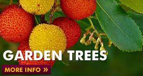 Buy Garden Plants Online At Johnstown Garden Centre Dublin Road Naas Co Kildare Ireland Coisas Faceis De Fazer
