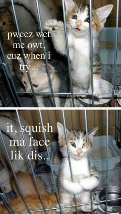 Pin By Printmeme Turning Memes Into On Funny Pets Funny Cat Pictures Funny Animals Funny Cats And Dogs