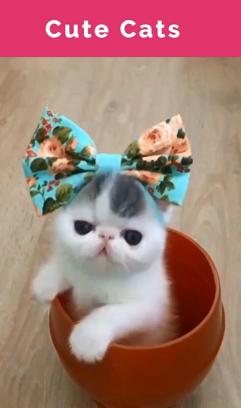 Funny, cute and LOVABLE CATS! Everything you love about cats, in one funny and adorable video! #catloverscommunity #catloverscommunity #cats #kittens