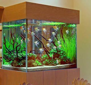 Wonderful Stendker Flächig Feuerrot Diskusfische In 1.400 Liter Aquarium   YouTube |  Discus | Pinterest | Diskusfische