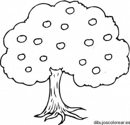 Dibujo De Un Arbol Con Frutos Dibujos De Arboles Paginas Para