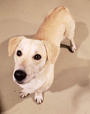 Chicago Il Basset Hound Meet Benita A Pet For Adoption Pet Adoption Basset Hound Pets