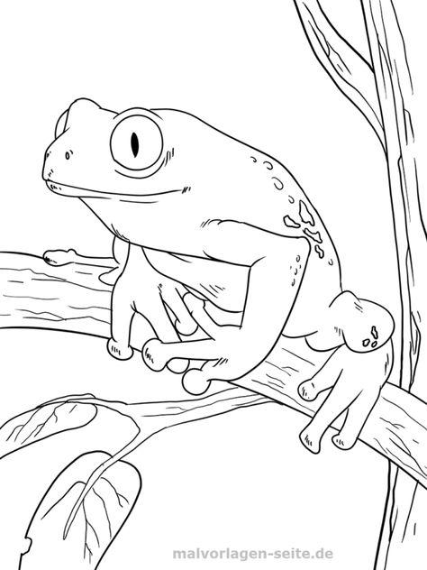 malvorlage frosch  ausmalbilder ausmalbild frosch und