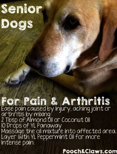 Pin On Pet Dogs