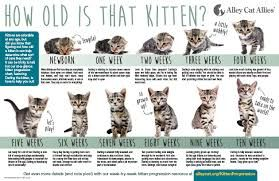 Pin By Cat Lover On Cat Development Stages Alley Cat Allies Feral Cats Pets