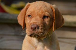 Der Vizslador Vizsladorzucht Hunde An Der Ems In 2020 Hundebilder Haustiere Hunde