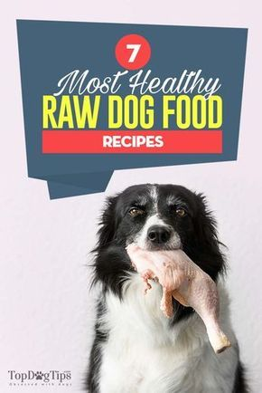 7 Great Raw Dog Food Recipes And How To Feed Raw Dieta Barf