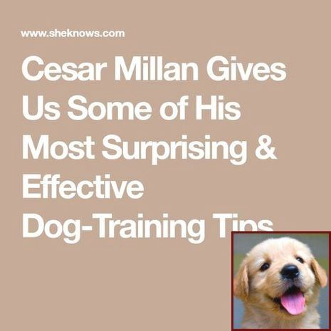House Training A Puppy With Bells And Clicker Training Dog To Roll