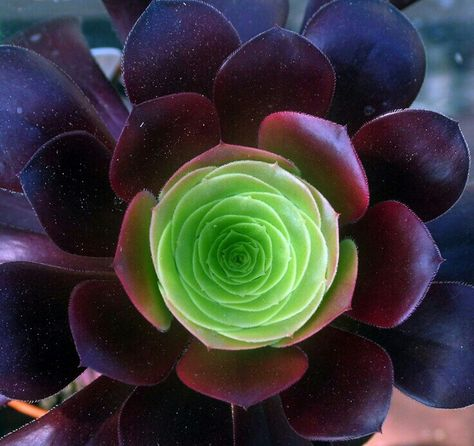 Epingle Par Catou Sur Vegetal Plante Succulente Cactees