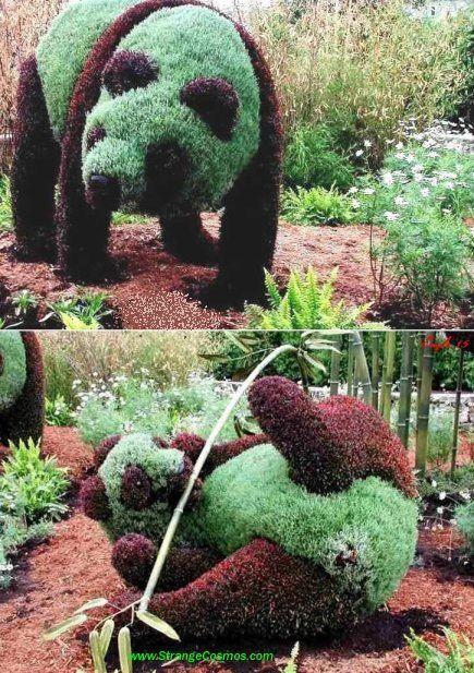 Art Topiaire Mon Jardin En 2020 Jardin De Topiaires