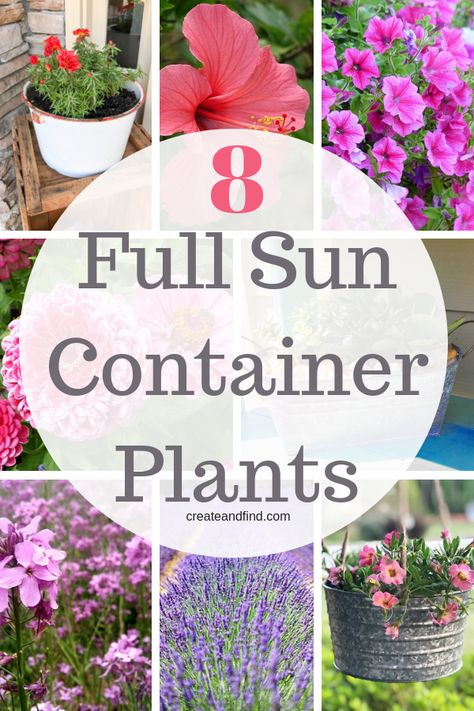 Container plants that love full sun. Add some of these to your planters or hanging baskets in full sun and enjoy beautiful color all summer #fullsunplants #containergardening #containerplants #flowers #plants #gardening