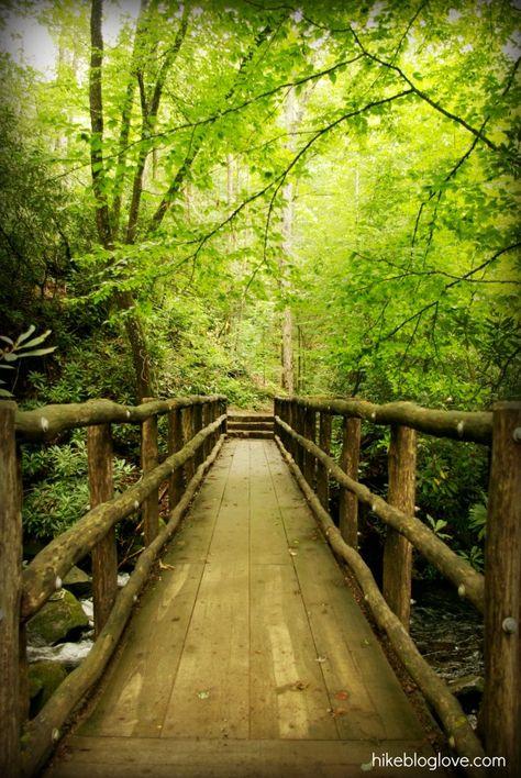 Joyce Kilmer Memorial Forest, Snowbird Mountain, North Carolina #hiking