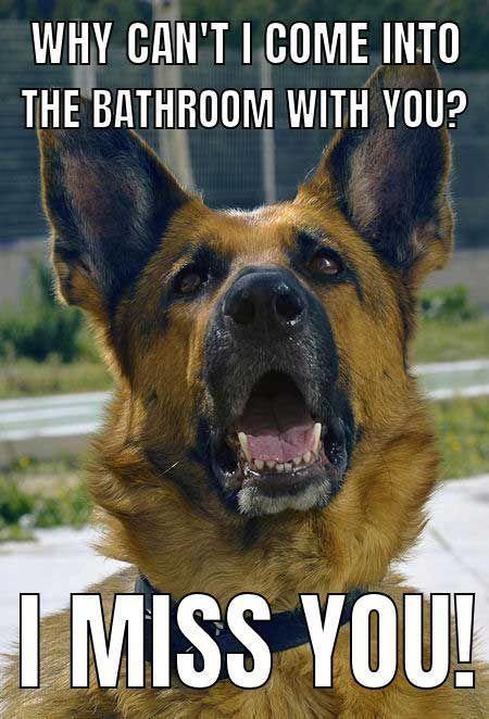 Funny Dog Meme With A German Shepherd Dog Dogs Funny Meme
