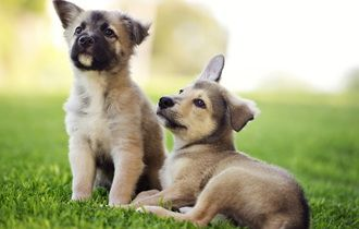 Summer Dogs Puppies Wallpaper 104501 Puppies Animals Cute Puppy Pictures