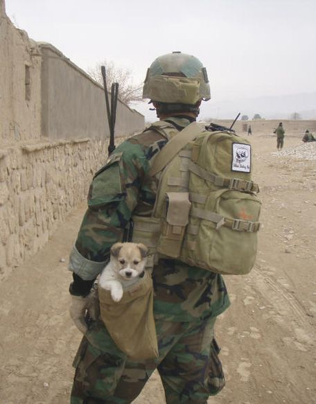 Nowzad Rescuing Stray and Abandoned Animals from Afghanistan, they need our support.