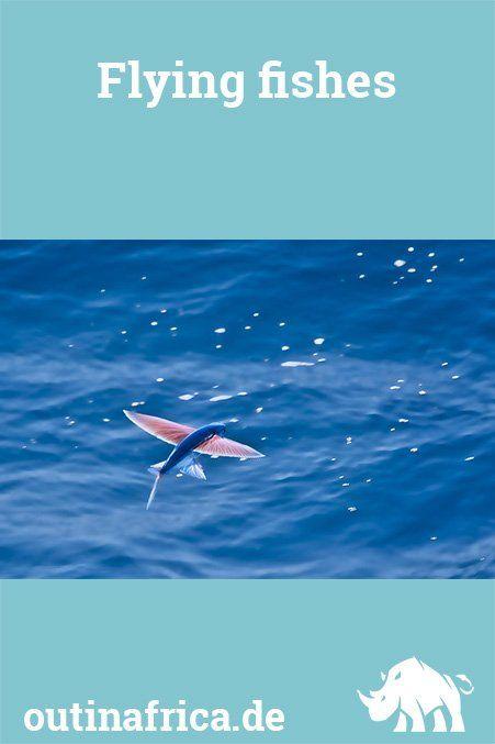 Flying Fishes Fische Fliegen Frachtschiff