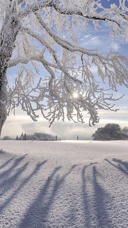 Weihnachten 2019 Schnee.Winter Schnee Plätzchen Und Weihnachten In Sicht Was Will Man