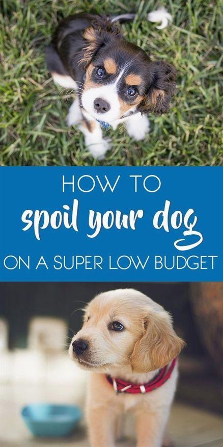 Dog Training Belt Dog Training Videos For Kids Dog Training