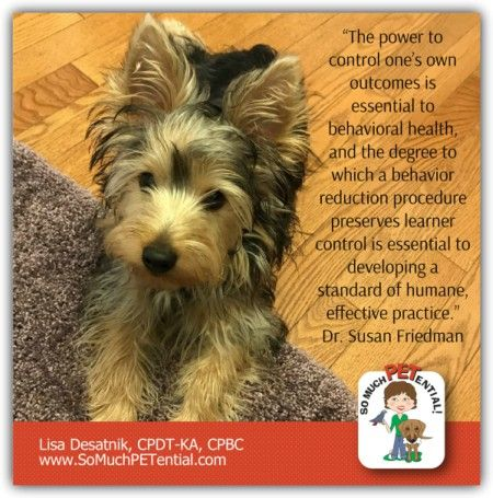 Cincinnati Certified Dog Trainer Lisa Desatnik Cpdt Ka Talks