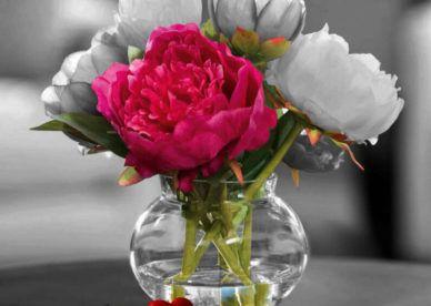 صور ورود الحب Rose Flower Love عالم الصور Rose Flower Flowers Rose
