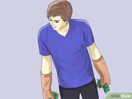 Eine Efeupflanze Entfernen Efeu Pflanzen Gemeiner Efeu