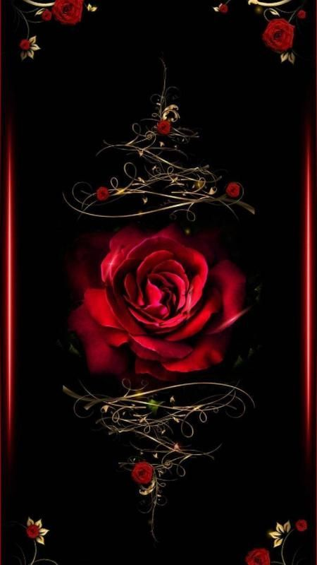 Free Rose Wallpaper For Your Phone Love Romantic Heart Wallpaper Wallpapers Android Iphone Rose Rose Wallpaper Gothic Wallpaper Flower Phone Wallpaper