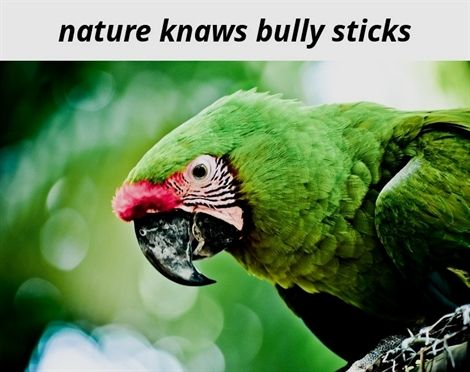 Nature Knaws Bully Sticks 509 20190409134630 70 Nature Allegro Cantabile Natural Quartz Crystal Nature Documentary 2016 Animal Parrot Birds Pet Birds