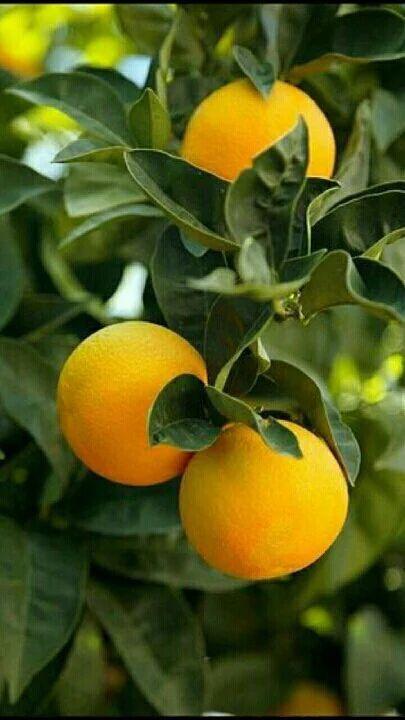 Pin Di Dohyang Lee Su Fruit And Veggies Agrumi Frutta Verdura