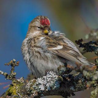 صور جميلة صور طيور جميلة بألوان غريبة Love Images Bird Photo Photo