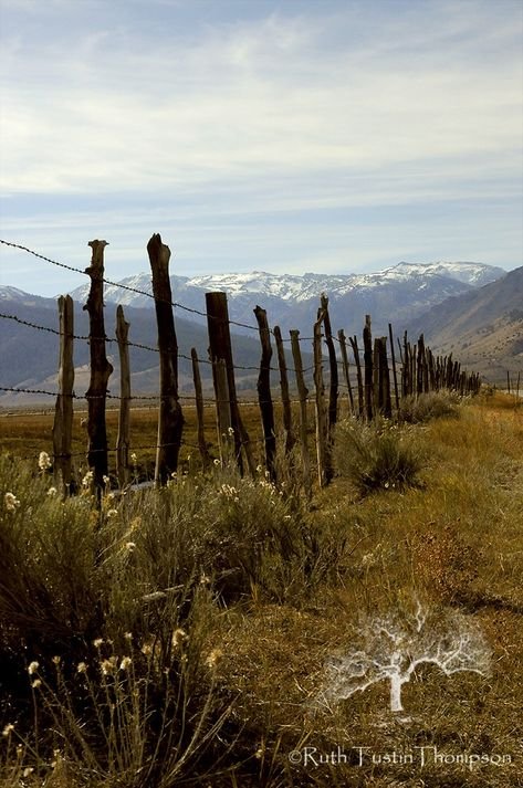 country fences on pinterest | fence line in the Eastern Sierras