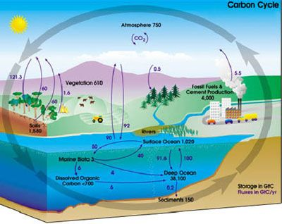 Why Is the Carbon Cycle Important?: The carbon cycle describes the storage and exchange of carbon between the Earth's biosphere, atmosphere, hydrosphere, and geosphere.