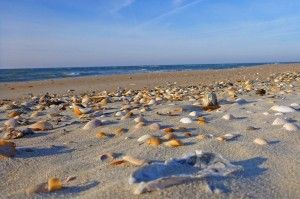 Best Shelling Beaches In North Carolina S Outer Banks Emerald Isle Realty North Carolina Beaches Sea Glass Beach Ocracoke Island