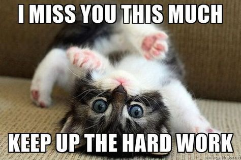 60 Cutest I Miss You Memes Of All Time Sayingimages Com I Miss You Meme Missing You Memes Funny Minion Quotes