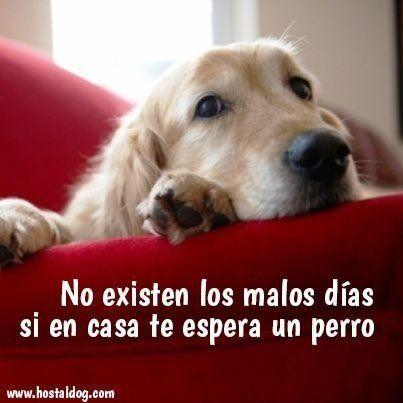 Los Perros No Son Mascotas Son Familia Frases