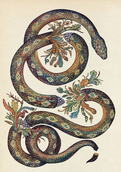 London-based artist Katie Scott creates intricate artworks inspired by vintage Japanese medical illustrations and the work of German biologist Ernst Haeckel. More illustrations via FormFiftyFive Illustrations Médicales, Illustration Tumblr, Medical Illustrations, Psychedelic Art, Urban Outfitters, Flora Und Fauna, Snake Art, Arte Obscura, Mystique