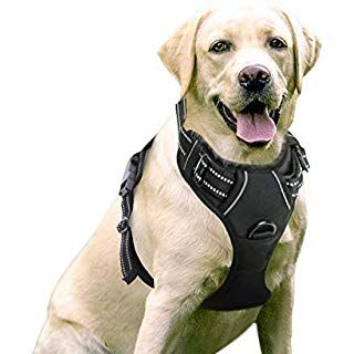 Amazon Com Ruffwear All Day Adventure Dog Harness Large To Very Large Breeds Adjustable Fit Size Large X Large Dog Harness Pet Harness Dog Vest Harness