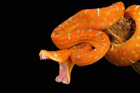 exotic snake | in Sweden and Northwestern University in Illinois suggests that snake ...