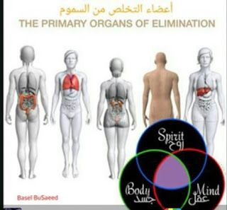 نظام مقترح لجميع حالات التضرر الدماغي والحالات الميؤوس منها و ج ن Body Blog Detox