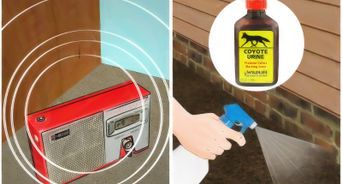 Get Rid Of Squirrels In The Attic Get Rid Of Squirrels Homemade Rat Poison Squirrel