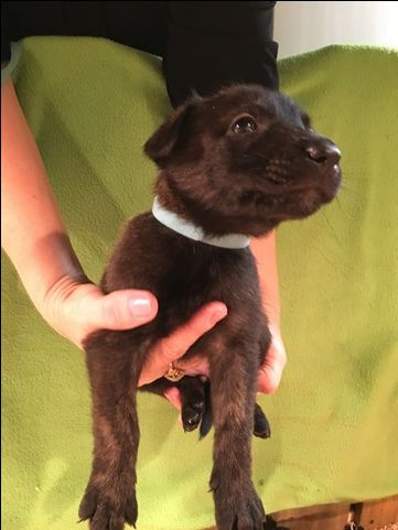 Pin By Alyssa Oviasogie On Puppers Doggos And Woofers Black German Shepherd German Shepherd Dogs Dog Breeder