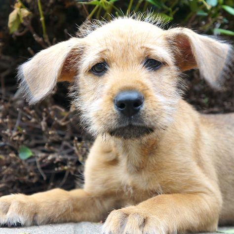 Dog Adoption San Diego Adopt A Dog Cat Adoption San Diego Adopt A Cat Helen Woodward Animal Center Dog Adoption Cat Adoption Animals