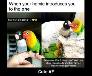 When Your Homie Introduces You To The One Cute Af Cute Af Ifunny Animal Memes Cute Animals Cute Funny Animals