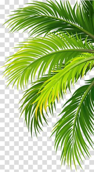Green Palm Tree Sticker Coconut Water Air Filter Plant Leaves Transparent Background Png Clipart Palm Tree Sticker Palm Tree Art Palm Tree Png