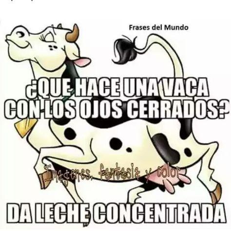 Una vaca concentrada