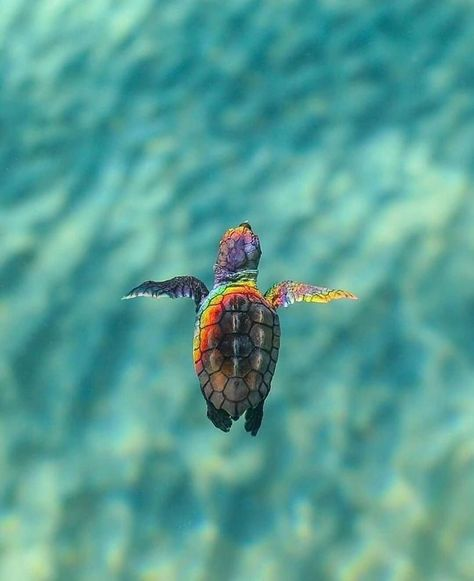 Foto - Best Picture For animal wallpaper iphone nature For Your Taste You are l Tier Wallpaper, Animal Wallpaper, Baby Animals Pictures, Cute Animal Photos, Cute Little Animals, Cute Funny Animals, Fotografie Website, Cute Baby Turtles, Turtle Baby