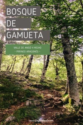 Ruta Por El Bosque De Gamueta Pirineo Aragonés Trazando Ruta Pirineo Aragones Bosque Aragonesa