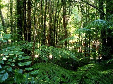 Floresta Tropical Com Imagens Plantas Da Floresta Floresta Tropical Biomas