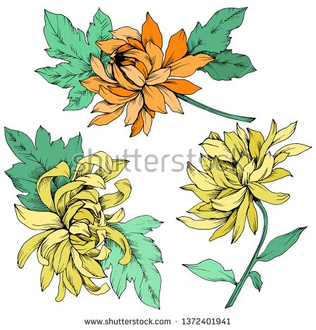 Stock Vector Vector Yellow And Orange Chrysanthemum Floral Botanical Flowers Wild Spring Leaf Wildflow Flower Illustration Floral Botanical Botanical Flowers