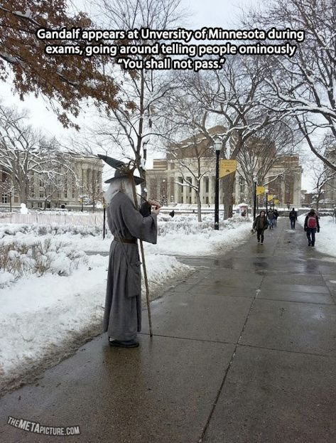 Funny pictures about Gandalf during finals. Oh, and cool pics about Gandalf during finals. Also, Gandalf during finals. You Shall Not Pass, J. R. R. Tolkien, College Humor, College Life, College Song, Funny College, School Humor, College Basketball, College Football