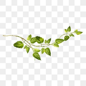 Creative Green Vines Png And Clipart Vines Funny Art Floating Material